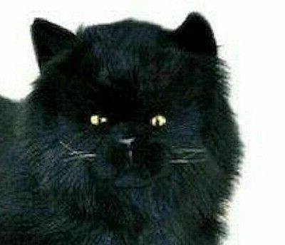 black cat lying soft plush stuffed toy